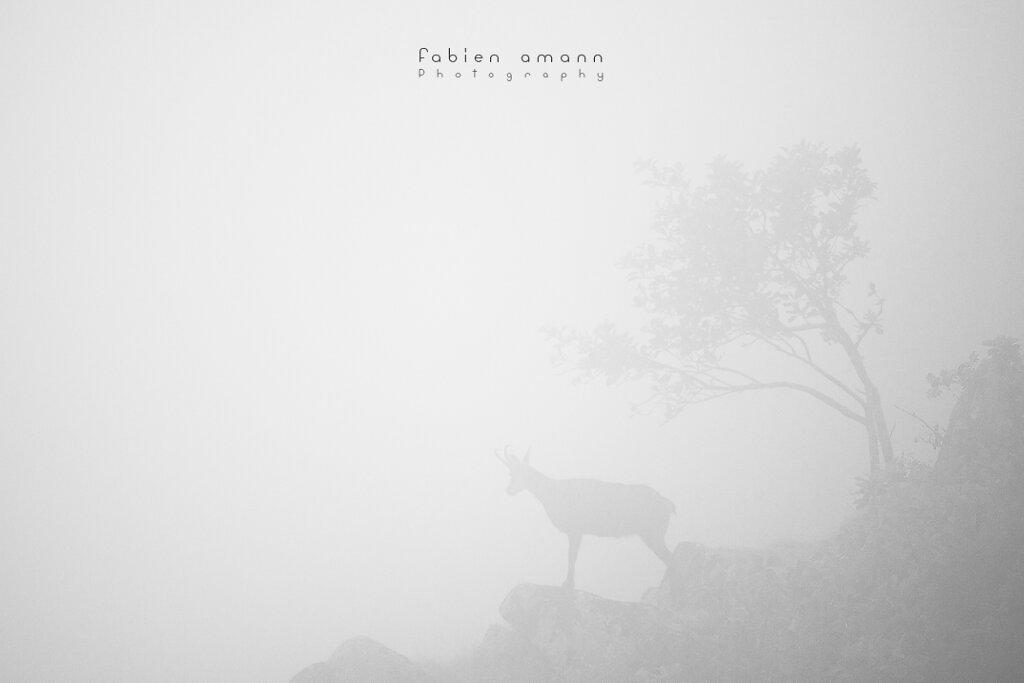 Camoscio nella nebbia