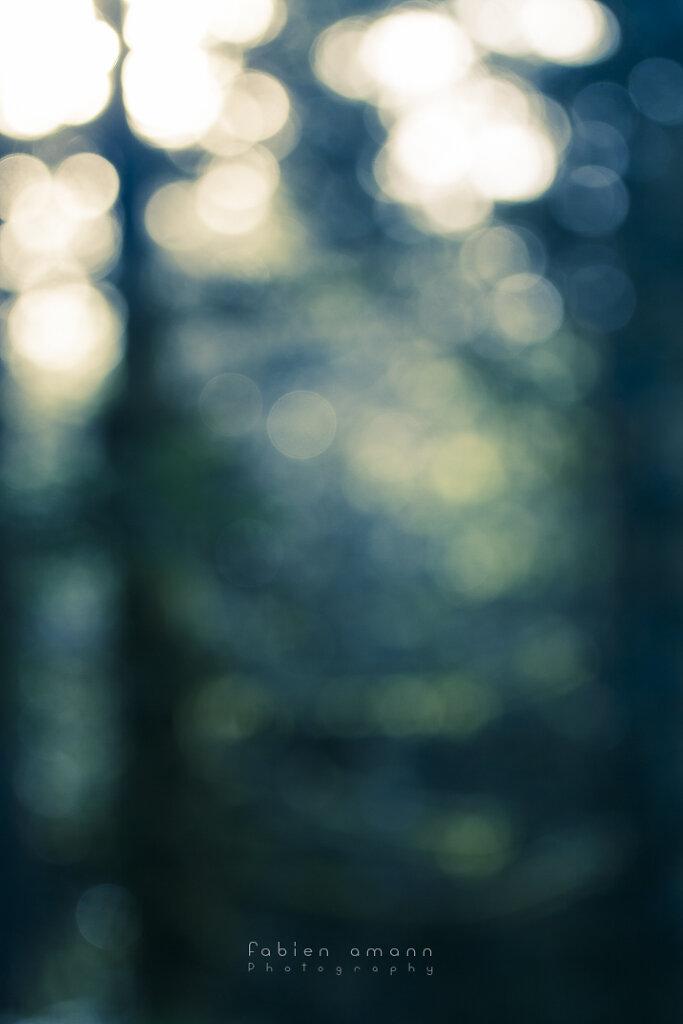 Avec la lumière 09