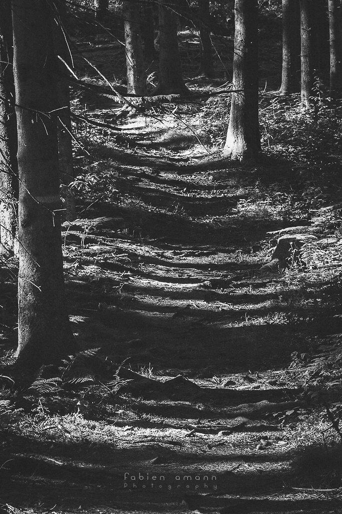 Follow the path 2