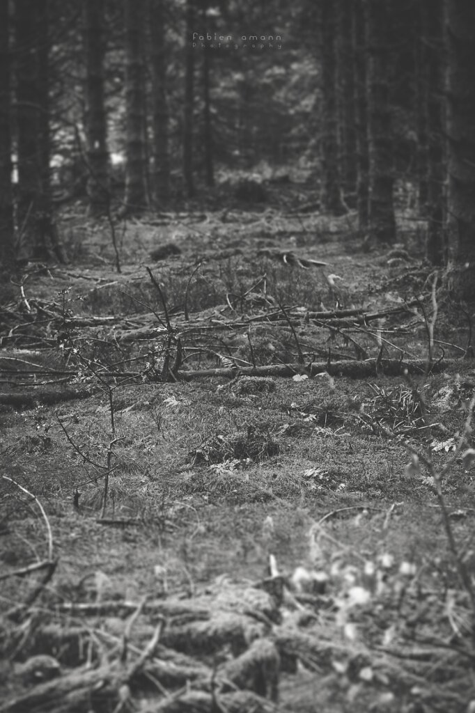 In the woods 4