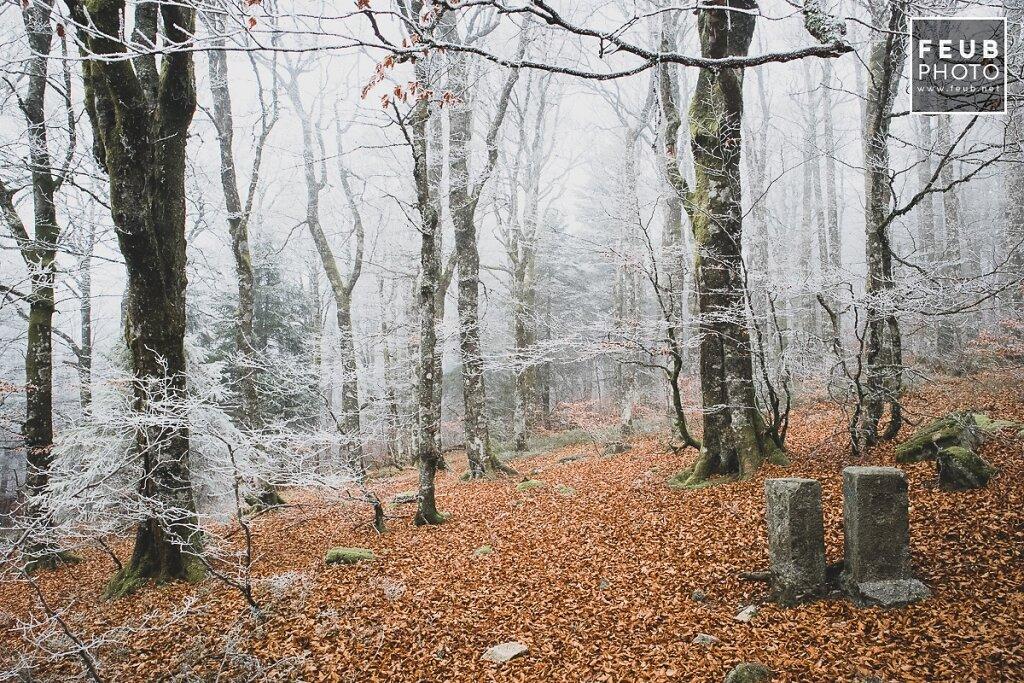 Japonaises Vosges