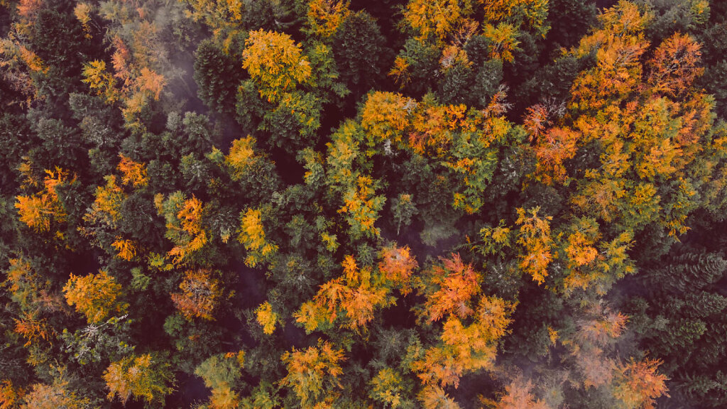 Autumn foliage 28